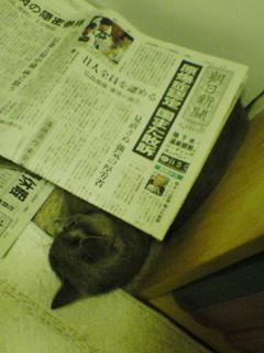 新聞ふとん